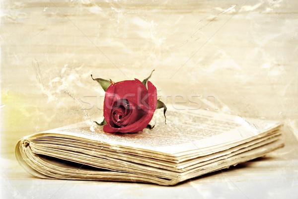 старые романтика красную розу старые книги текстуру бумаги книга Сток-фото © guffoto