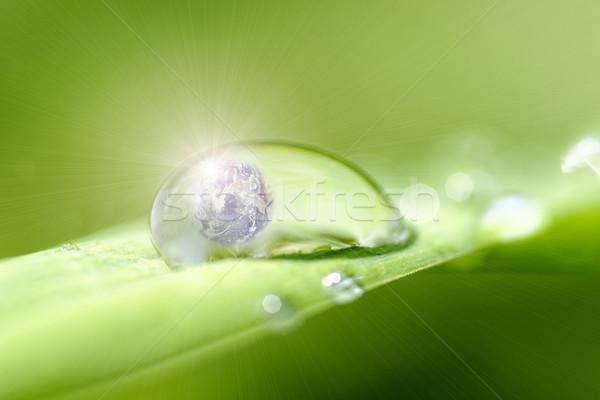 Microworld Stock photo © guffoto