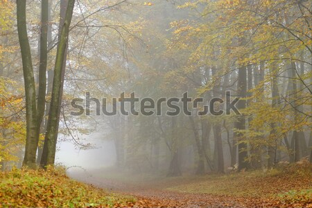 Misty forest Stock photo © guffoto