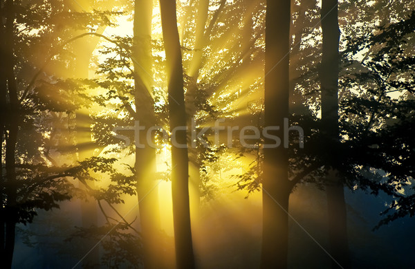sunbeam Stock photo © guffoto