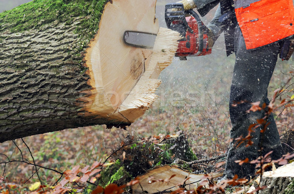 chainsaw Stock photo © guffoto