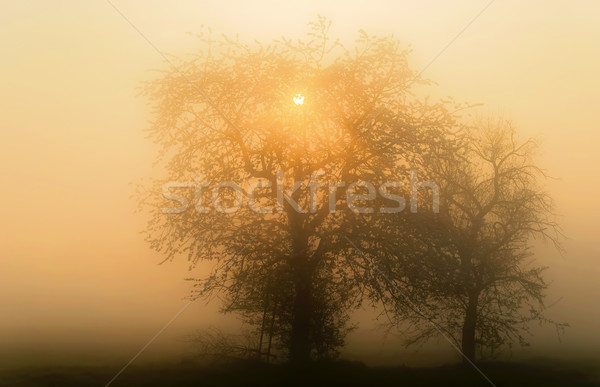 Misty paysage nature silhouette froid brouillard Photo stock © guffoto