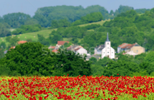 Pipacsok mező francia vidék tavasz nyár Stock fotó © guffoto