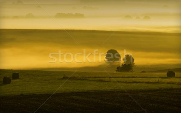 Hajnal vidék reggel fény naplemente arany Stock fotó © guffoto