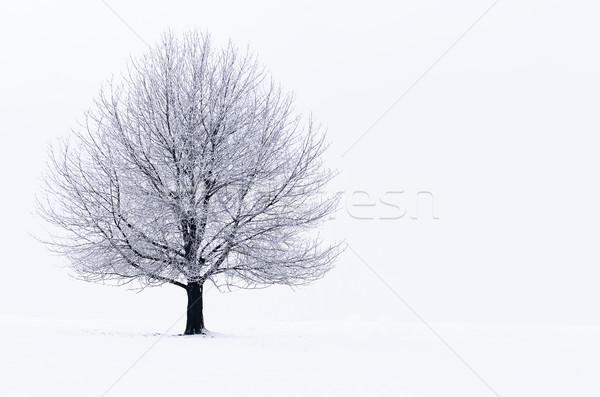 Inverno paisagem árvore coberto neve natureza Foto stock © guffoto