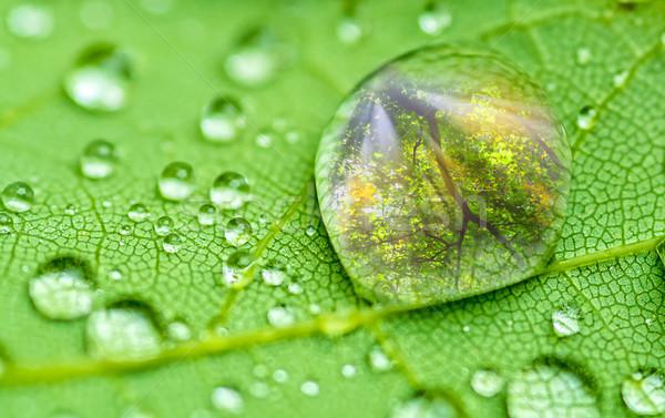 Kropla deszczu zielony liść charakter deszcz zielone Zdjęcia stock © guffoto