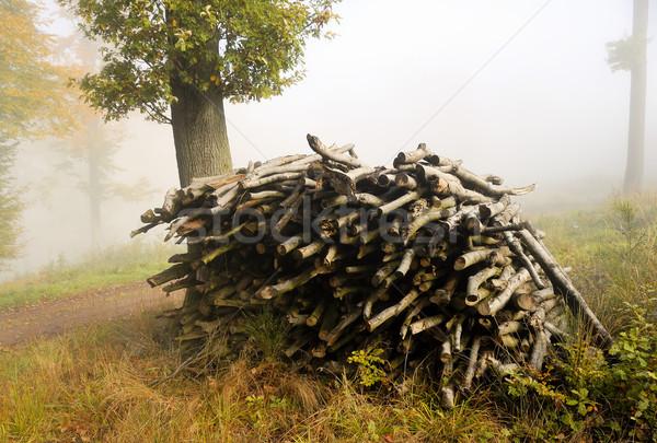 дрова лес дерево пейзаж осень Сток-фото © guffoto