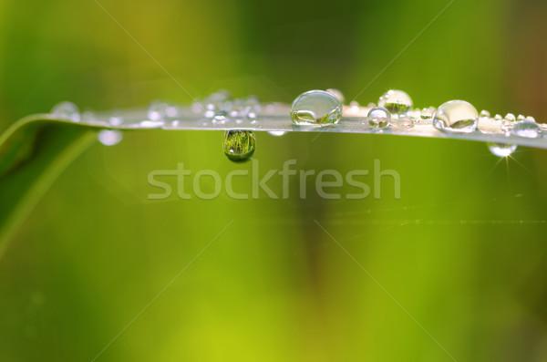 Dauw blad gedekt water regen Stockfoto © guffoto