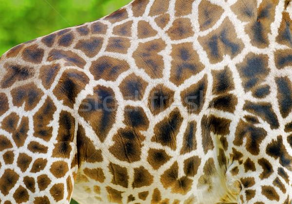 жираф кожи природы черный шаблон зоопарке Сток-фото © guffoto