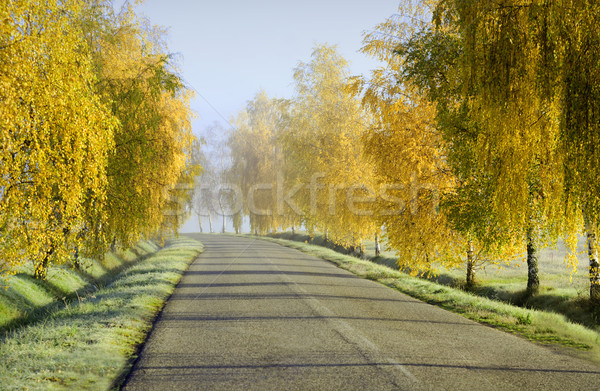 countryside road Stock photo © guffoto