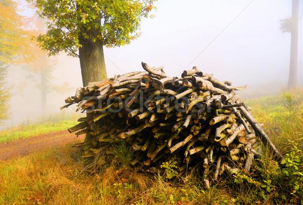 Lenha floresta madeira natureza paisagem Foto stock © guffoto