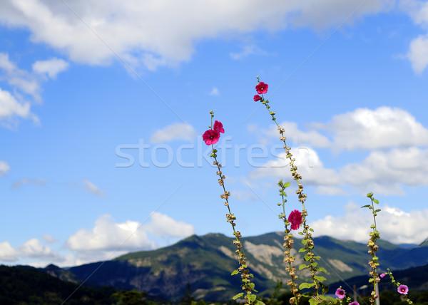 Virágok természet tájkép kert hegy zöld Stock fotó © guffoto