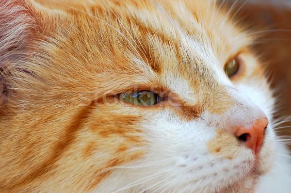 красный кошки внутренний портрет лице цвета Сток-фото © guffoto