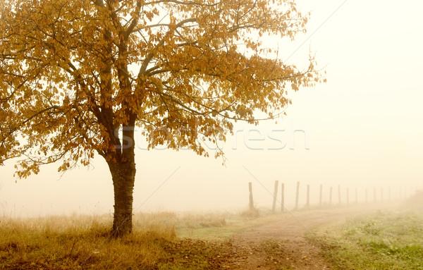 ősz őszi légkör vidék mező ősz Stock fotó © guffoto