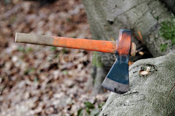ax stuck in a tree Stock photo © guffoto