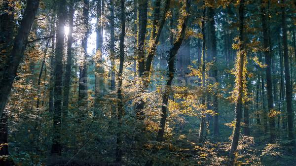 sunlight Stock photo © guffoto