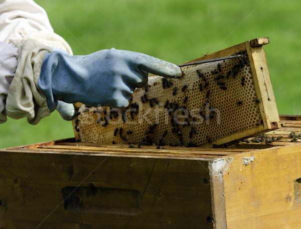 apiary Stock photo © guffoto