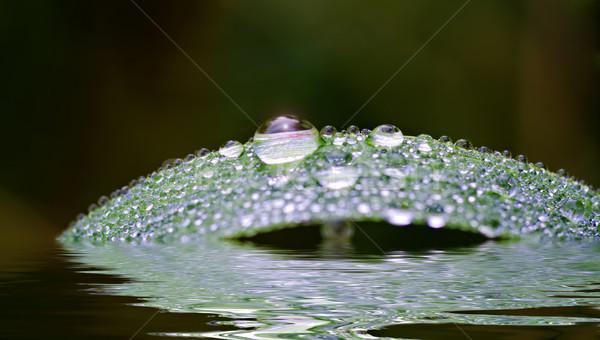 Csepp cseppek zöld levél természet levél növény Stock fotó © guffoto