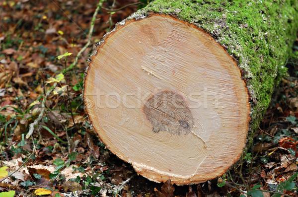 Fatörzs fa fa ipar kör ugatás Stock fotó © guffoto