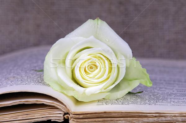 Rózsa nyitott könyv fedett virág papír könyv Stock fotó © guffoto