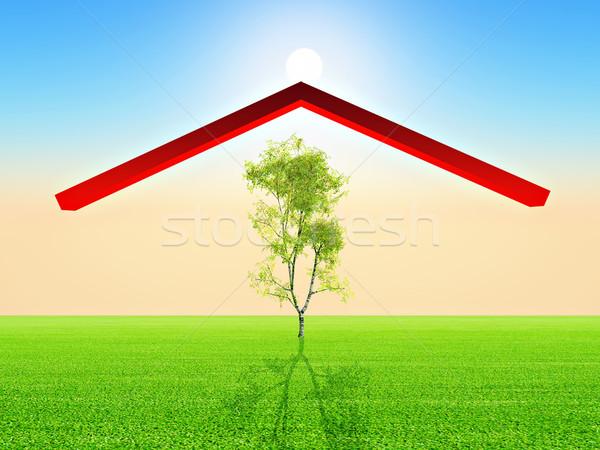 Abedul árbol casa techo madera naturaleza Foto stock © guffoto