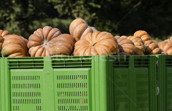 Sütőtök termék doboz mezőgazdaság zöldség Stock fotó © guffoto