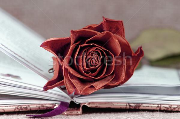 Piros rózsa piros rózsa nyitott könyv virág papír Stock fotó © guffoto