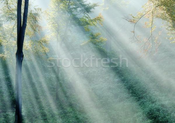 Puslu orman güneş ışınları ağaç ahşap Stok fotoğraf © guffoto