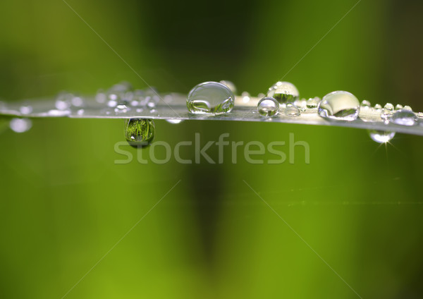Gotas cair folha natureza planta Foto stock © guffoto
