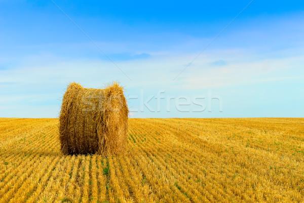 straw bale Stock photo © guffoto