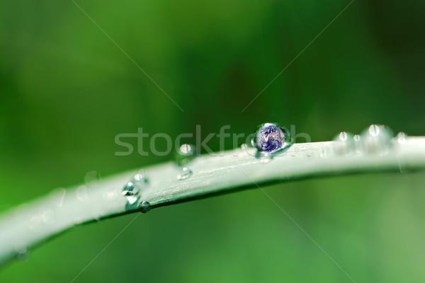 Föld csepp fotó Föld bent vízcsepp Stock fotó © guffoto