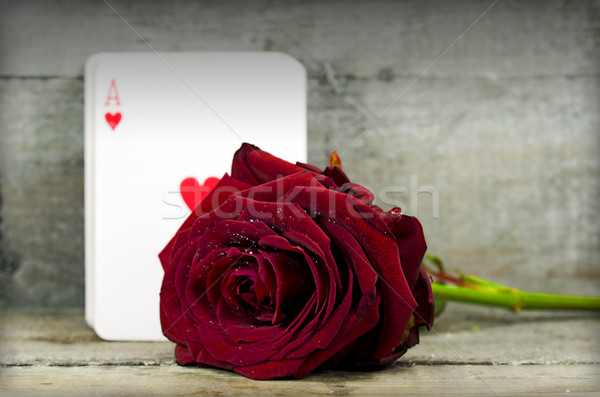 rose and ace Stock photo © guffoto