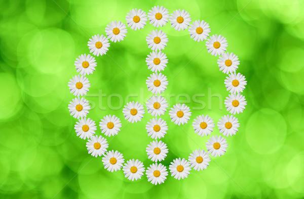Béke szeretet szimbólum százszorszép virág zöld Stock fotó © guffoto