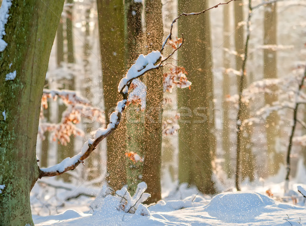 Erdő fa fa hó tél fehér Stock fotó © guffoto