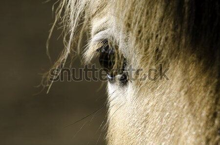 horse eye Stock photo © guffoto