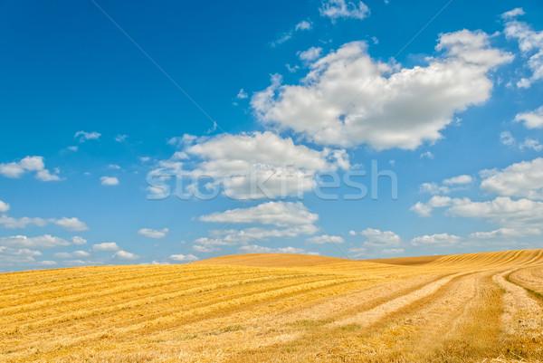 Alan bulutlu gökyüzü manzara yaz ufuk Stok fotoğraf © guffoto