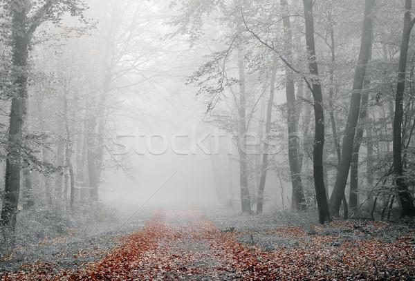 Ködös erdő légkör őszi szezon fa természet Stock fotó © guffoto