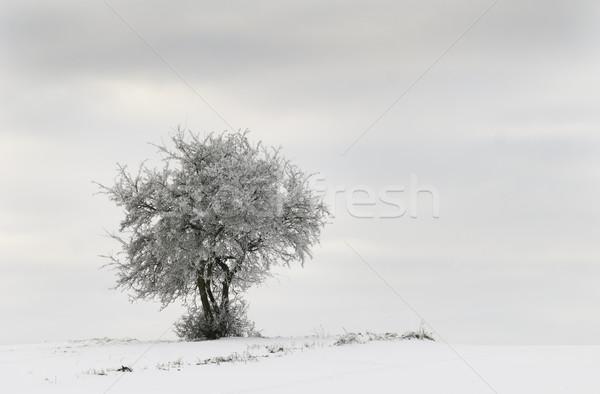 Izolált fa tél tájkép Stock fotó © guffoto
