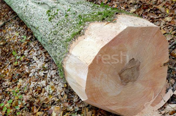 Bosbouw werk vers gesneden boom hout Stockfoto © guffoto
