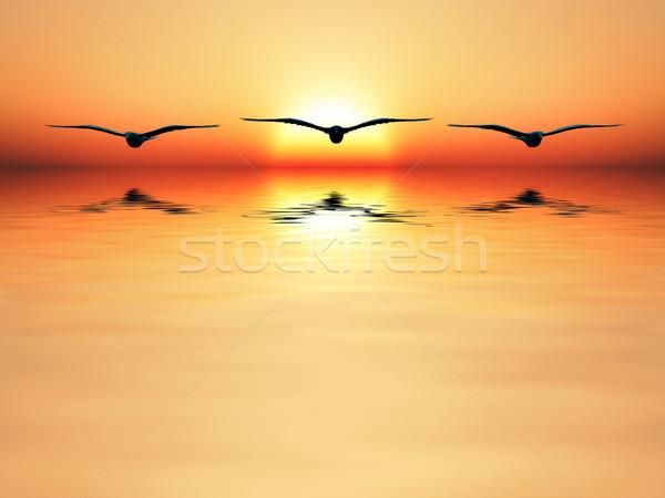 Mer trois oiseau battant coucher du soleil paysage Photo stock © guffoto