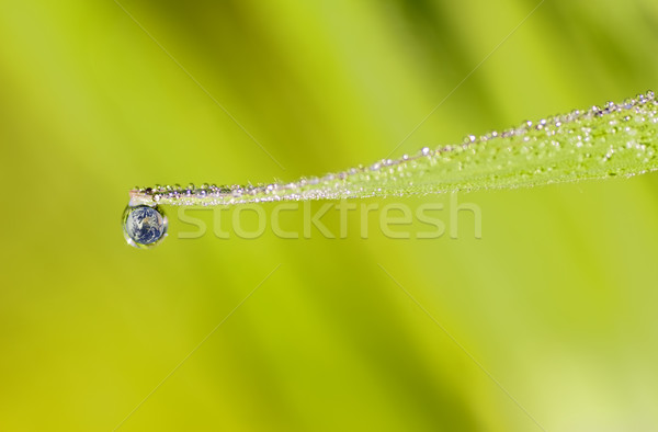 Drop Stock photo © guffoto