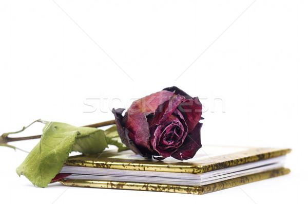 Buch Poesie rot stieg Blume Stock foto © guffoto