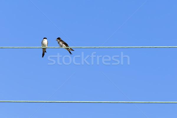 swallow Stock photo © guffoto