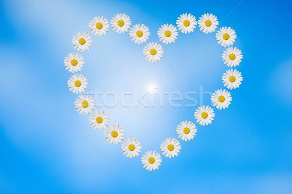 Primavera coração margaridas flor natureza fundo Foto stock © guffoto