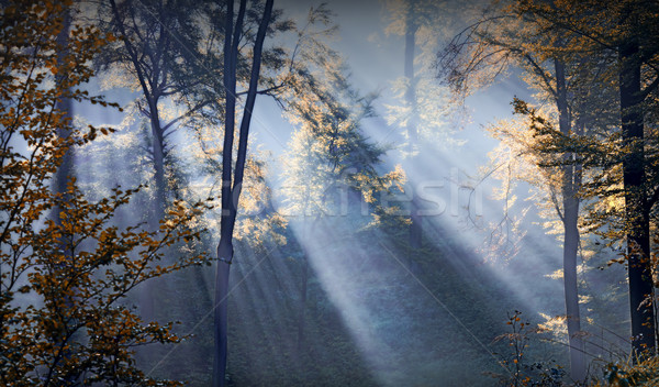 forest sunbeams Stock photo © guffoto