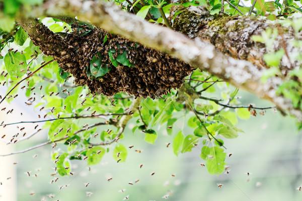 swarm Stock photo © guffoto