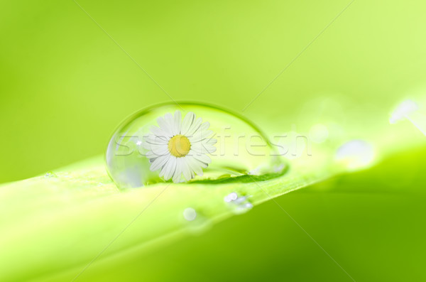 drop of spring Stock photo © guffoto