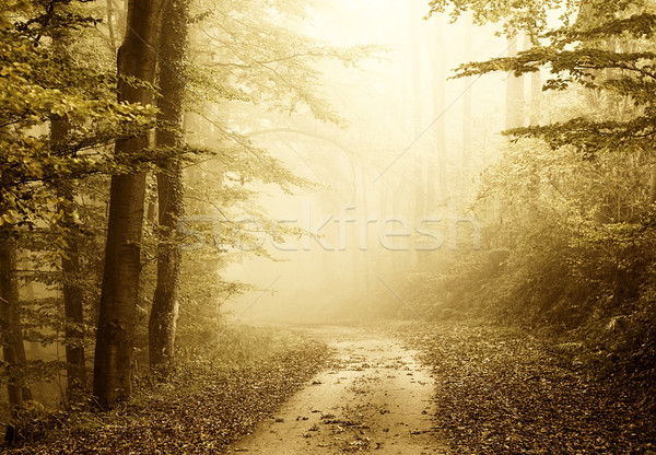 forest Stock photo © guffoto