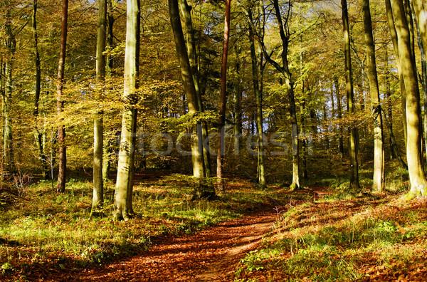 forest lane Stock photo © guffoto