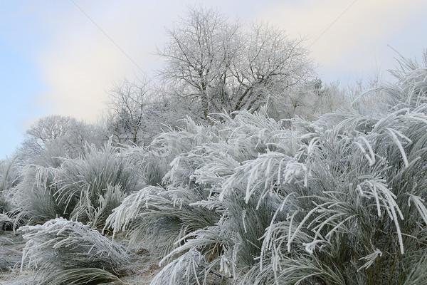 frosted landcsape Stock photo © guffoto